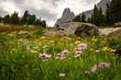 War Bonnet in Wildflowers