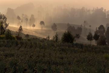 Sunrise in cemoro lawang near mount Bromo © mauriziobiso
