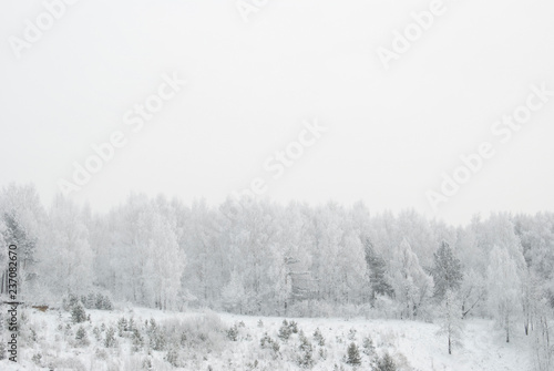 snowy evening winter forest