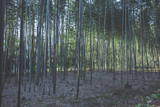 京都 竹林の風景 © beeboys