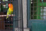 Yogayakarta Bird Market: Parrot in a cage