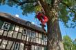 canvas print picture -  Baumkletterer schneiden eine Linde aus, Gärtner, Baumpflege,