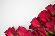 flowers, valentines day and holidays concept - close up of red roses on white background