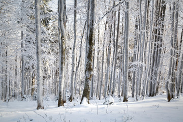Cold and snowy winter day in tree forest landscape. © robsonphoto