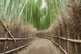 path in Bamboo forest in Arashiyama, Kyoto, Japan - 237140869