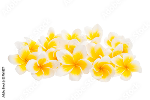 plumeria flowers isolated