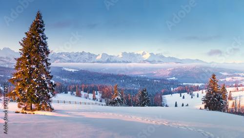 Winter wonderland - 237174228