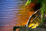 Beautiful colorful autumn background of floating lake or river water. Concept of toxic and polluted nature - 237183806