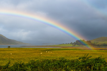 Colorful Rainbow Over Fresh Pasture With Sheep On The Isle Of Skye In Scotland