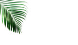 Tropical palm leaves, greenery against white wall. Creative layout, toned image filter, minimalism, copy space - 237195002