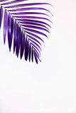 Purple tropical palm leaves against white wall. Creative layout, toned image filter, minimalism, copy space - 237195010