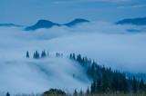 forest, dark, coniferous,  mountains, fog, haze, dusk, mysticism, fantastic, fabulous, sinister, scary, mountainous, landscape, nature, gloomy,