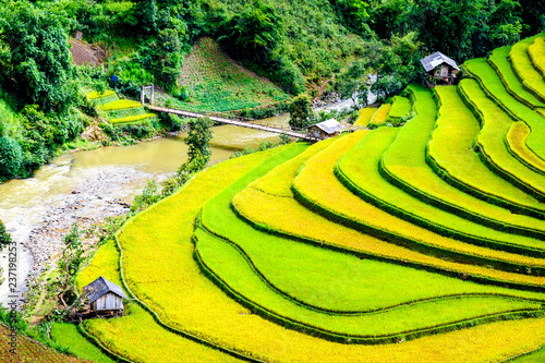 Leinwanddruck Bild Terraced rice paddy in Mu Cang Chai, Yen Bai province, Vietnam.