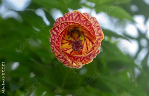 Flores - 237202872