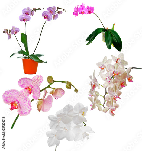 orchids collection isolated on a white background