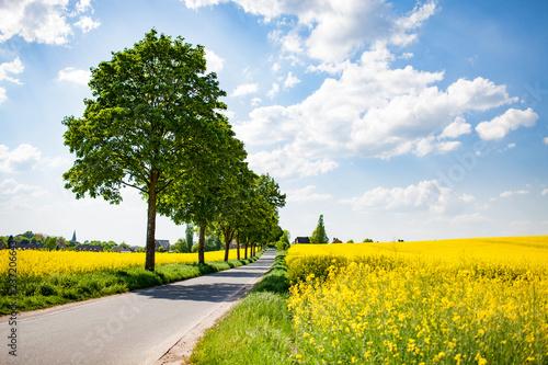 Droga w pola rzepaku w lecie