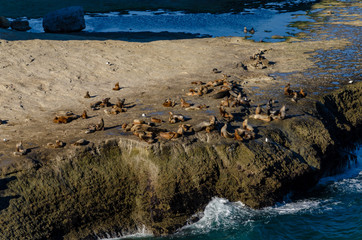 A lot of sea lions on a giant rock