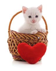 Small kitten in a basket.