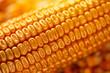 Leinwanddruck Bild - Corn cob with golden seed kernels, conceptual image