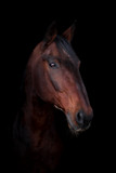 Beautiful horse on a dark background