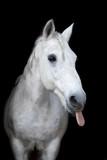 Beautiful horse on a dark background