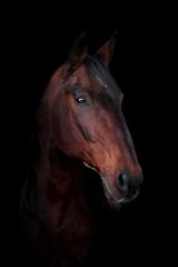 Beautiful horse on a dark background © Мария Старосельцева