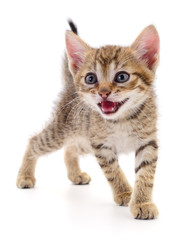 Kitten on white background.
