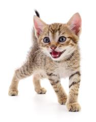 Kitten on white background. © Anatolii