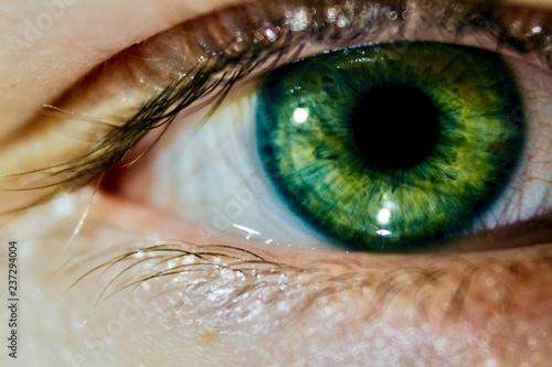 Green Eye - 237294004