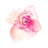 Isolated Pink Watercolor Flower Peony - 237301089
