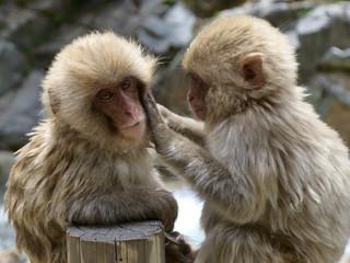 仲良しな小猿
