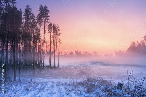 Zimowa przyroda o świcie