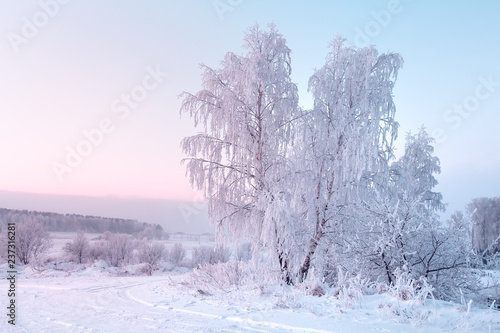 Christmas nature background with frosty tree - 237316281