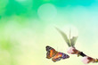 Beautiful colored butterfly in flight and branch of flowering tree in spring at Sunrise on light blue and green background macro. Amazing elegant artistic image nature in spring