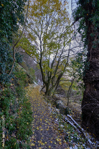 Path in the forest - 237333475