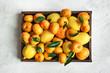 Quadro Various citrus fruits