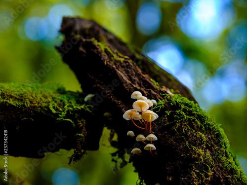 Maushroom on tree