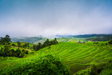 Paddy Rice Field Plantation Landscape with Mountain View Background - 237344207