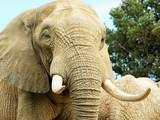 éléphant - 237360030