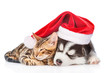 Leinwandbild Motiv Siberian Husky puppy in red christmas hat sleep with bengal kitten. isolated on white background
