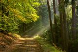 jesień na Mazurach - 237367823