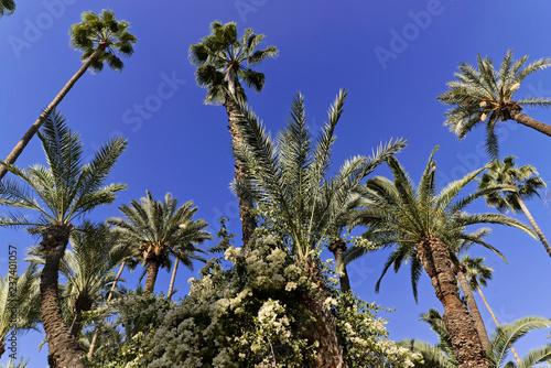 Botanischer Garten Jardin Majorelle, frühere Besitzer Yves Saint-Laurent und Pierre Bergé, Marrakesch, Marokko, Afrika