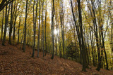 Direct sun rays which is lighting through trees in the forest - 237435881