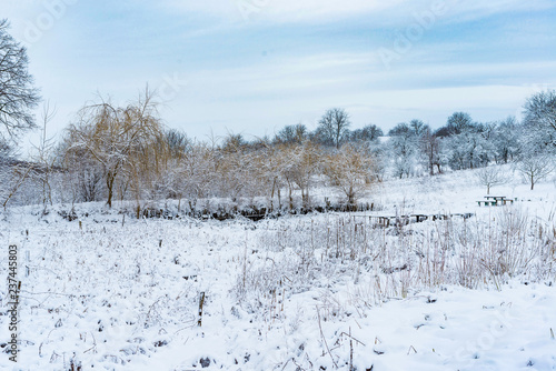 rural area with trees covered with snow