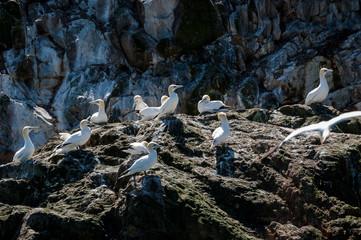 Reportage : Réserve naturelle en Bretagne