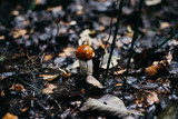 Mushrooms in Europe
