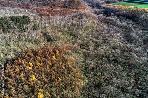 Późną jesienią las sosnowy Calap