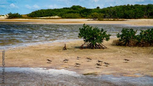 Plaża Kobiety lub biała wyspa. Park Narodowy w pobliżu Cancun. Tutaj możesz przećwiczyć każdego fotografa. Ptaki, kondory, pelikany, czaple. Jest wiele ptaków, a kolory natury są po prostu niesamowite.