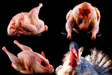Set raw turkey carcass on black background for menu. Christmas food