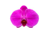 Beautiful purple orchid flower isolated on white background with clipping path